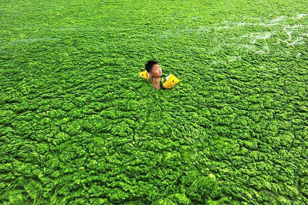 Водоросли на побережье Циндао, провинция Шаньдун. Фото: liveinternet.ru