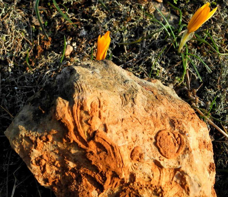 Таинственные письмена природы на камне. Фото: Алла Лавриненко/The Epoch Times Украина