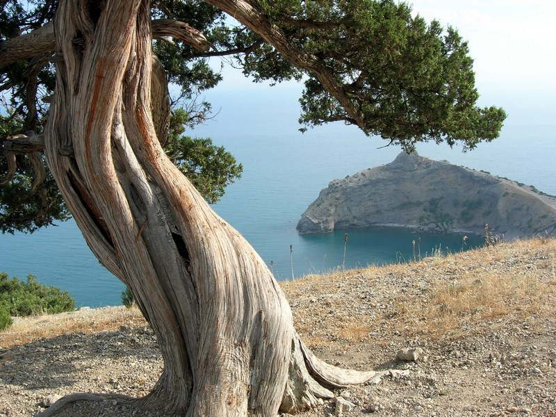 Крым, Новый свет, реликтовый можжевельник на вершине Орла. Фото: Алла Лавриненко/Великая Эпоха
