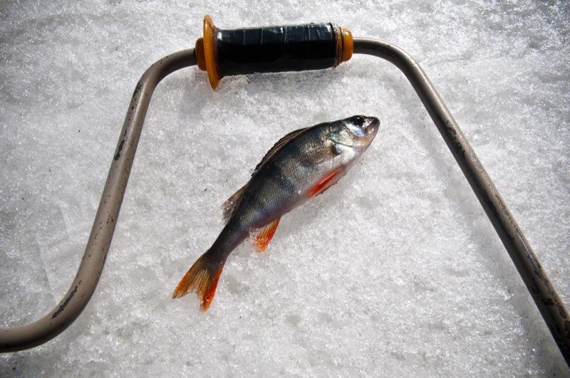 Зимняя рыбалка в одном из рукавов Днепра во время потепления в марте. Фото: Владимир Бородин/The Epoch Times Ураина