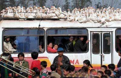 Перевозить грузы можно разными способами. Фото с aboluowang.com