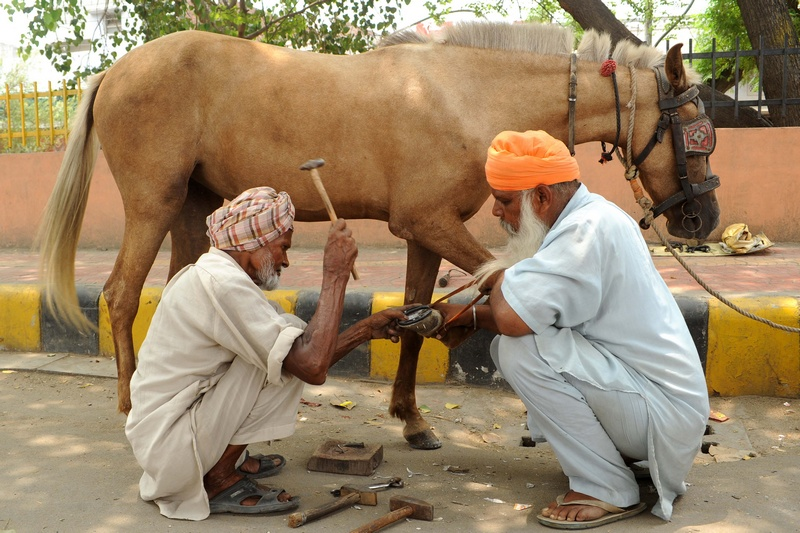 Амритсар, Индия, 28 июля. Кузнец Кулвант Сингх подковывает лошадь. Гужевой транспорт повсеместно используется в стране для перевозки грузов и пассажиров. Фото: NARINDER NANU/AFP/GettyImages