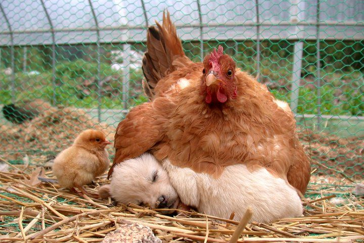 Фото с secretchina.com Фото с secretchina.com