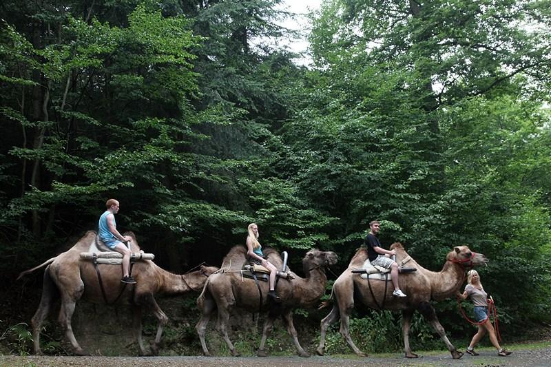 Узінген, Німеччина, 25 липня. Власниця верблюжиної ферми пропонує туристам оглянути околиці міста верхи на «кораблях пустелі». Фото: Hannelore Foerster/Getty Images