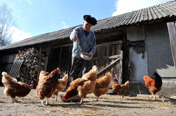 75-ти летний Иван Семенюк кормит кур в своем доме в в заброшенной деревне Парышив в 30 киллометровой зоне отчуждения вокруг Чернобыльской АЭС 23 марта 2011 года. (SERGEI SUPINSKY/AFP/Getty Images)