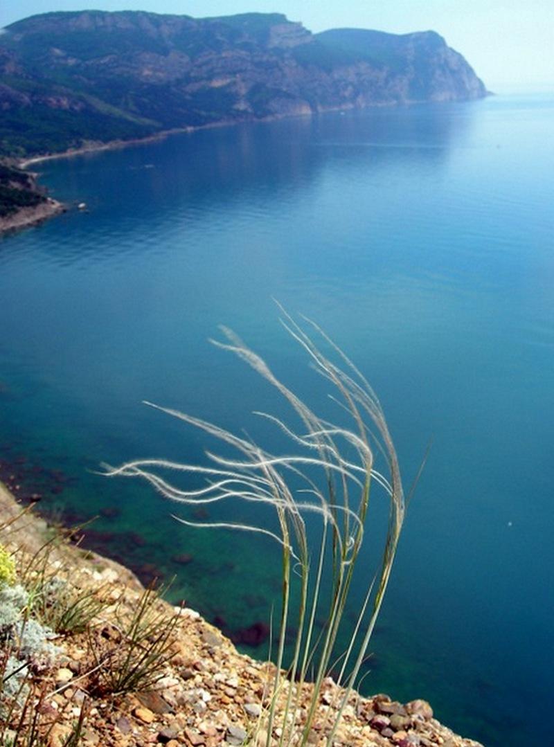 Цветет ковыль, Балаклава. Фото: Алла Лавриненко/Велика Епоха