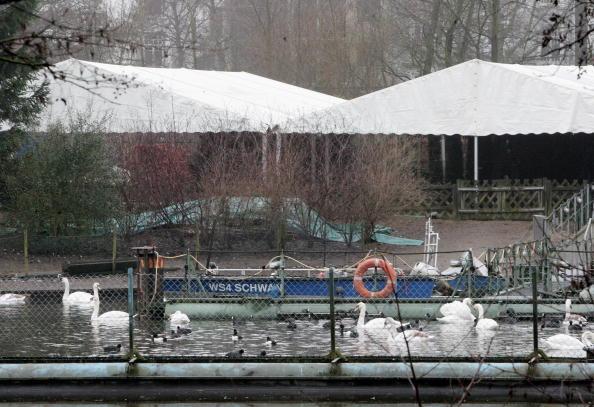 120 білих лебедів. У холодну пору року птахи мешкають на спеціальному штучному озері, яке ніколи не замерзає. Там побудовані будиночки-годівниці, де лебедів підкормлюють. Фото: Krafft Angerer/Getty Images