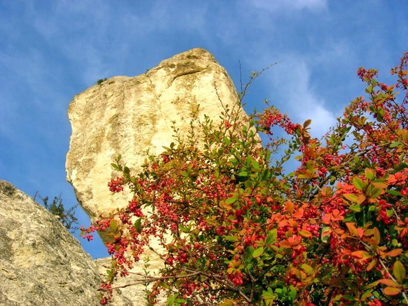 Барбарис. Фото: Алла Лавриненко/Великая Эпоха