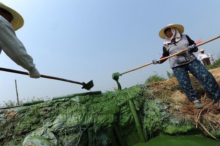 Озеро Чаоху в Китае, 2012 год. Фото: STR/AFP/Getty Images