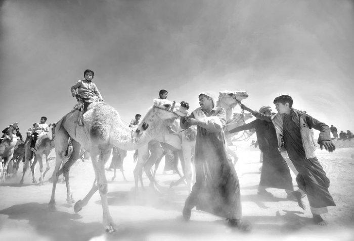 «Рынок верблюдов», Мохамед Камаль, Египет. Фото: photocontest.cgap.org