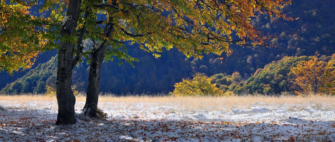 Жовтнева осінь у Закарпатті. Фото: denis-krivoy.livejournal.com