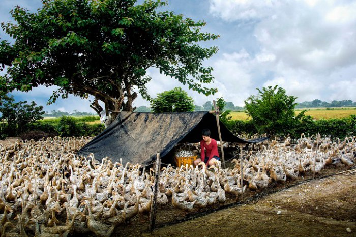 «Коллекция утиных яиц», Тран Ван Туй, Вьетнам. Фото: photocontest.cgap.org