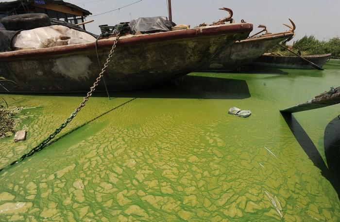 Озеро Чаоху в Китае, 2009 год. Фото: STR/AFP/Getty Images
