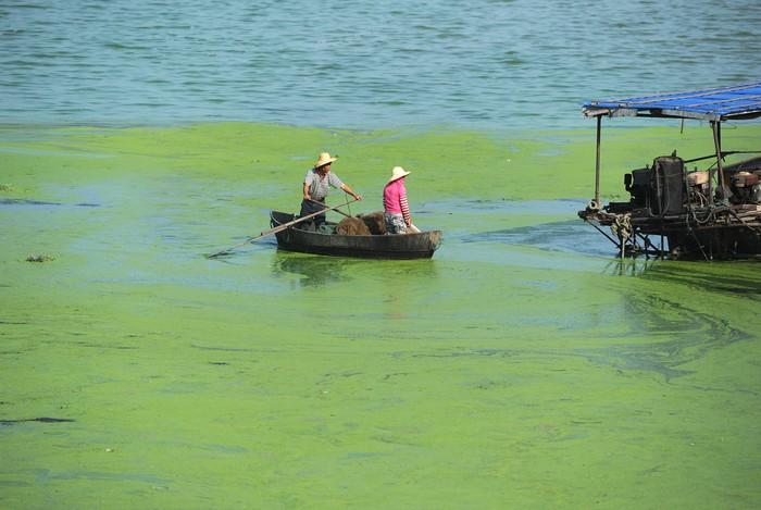 Озеро Чаоху в Китае, 2013 год. Фото: STR/AFP/Getty Images