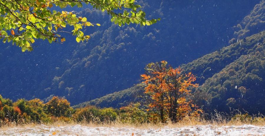 Октябрьская осень в Закарпатье. Фото: denis-krivoy.livejournal.com