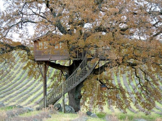 Будиночок на дереві дарує то відчуття гармонії і єдності з природою. Фото: hqroom.ru