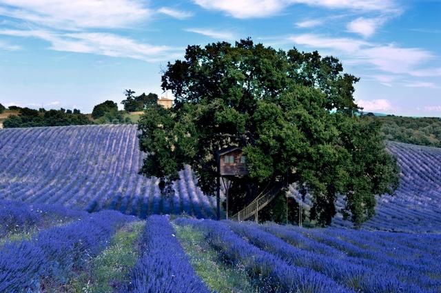 Гості Suite Blue можуть прогулюватися по оливкових гаях, збирати в саду фрукти, спробувати домашні ласощі - лавандове варення і мед. Фото: hqroom.ru