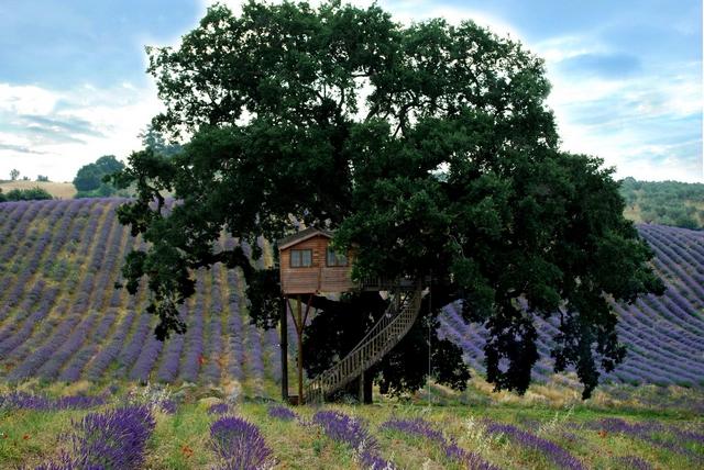 Suite Blue расположен в очень красивом месте: в паре шагов от него раскинулась оливковая роща и фиолетовые холмы лаванды. Фото: hqroom.ru