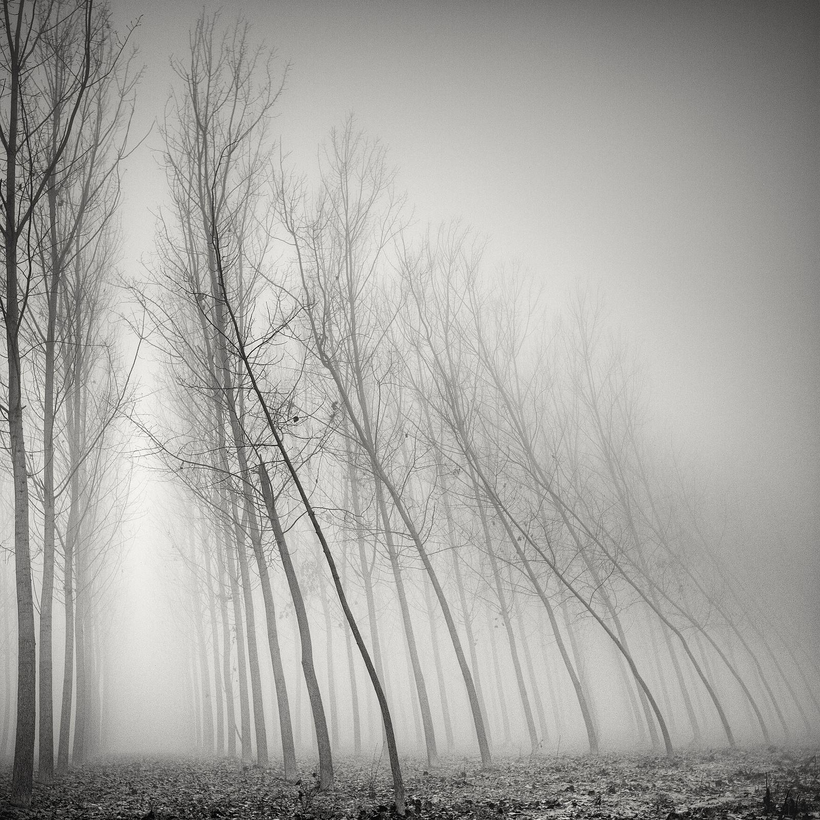 «Извилистость». Первое место в номинации «Ландшафты». Фото: Pierre Pellegrini
