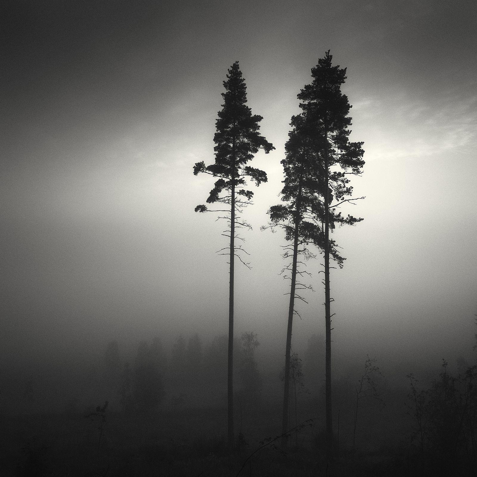 «Соснові ліси». Перше місце в «Nature trees». Фото: Vesa Pihanurmi