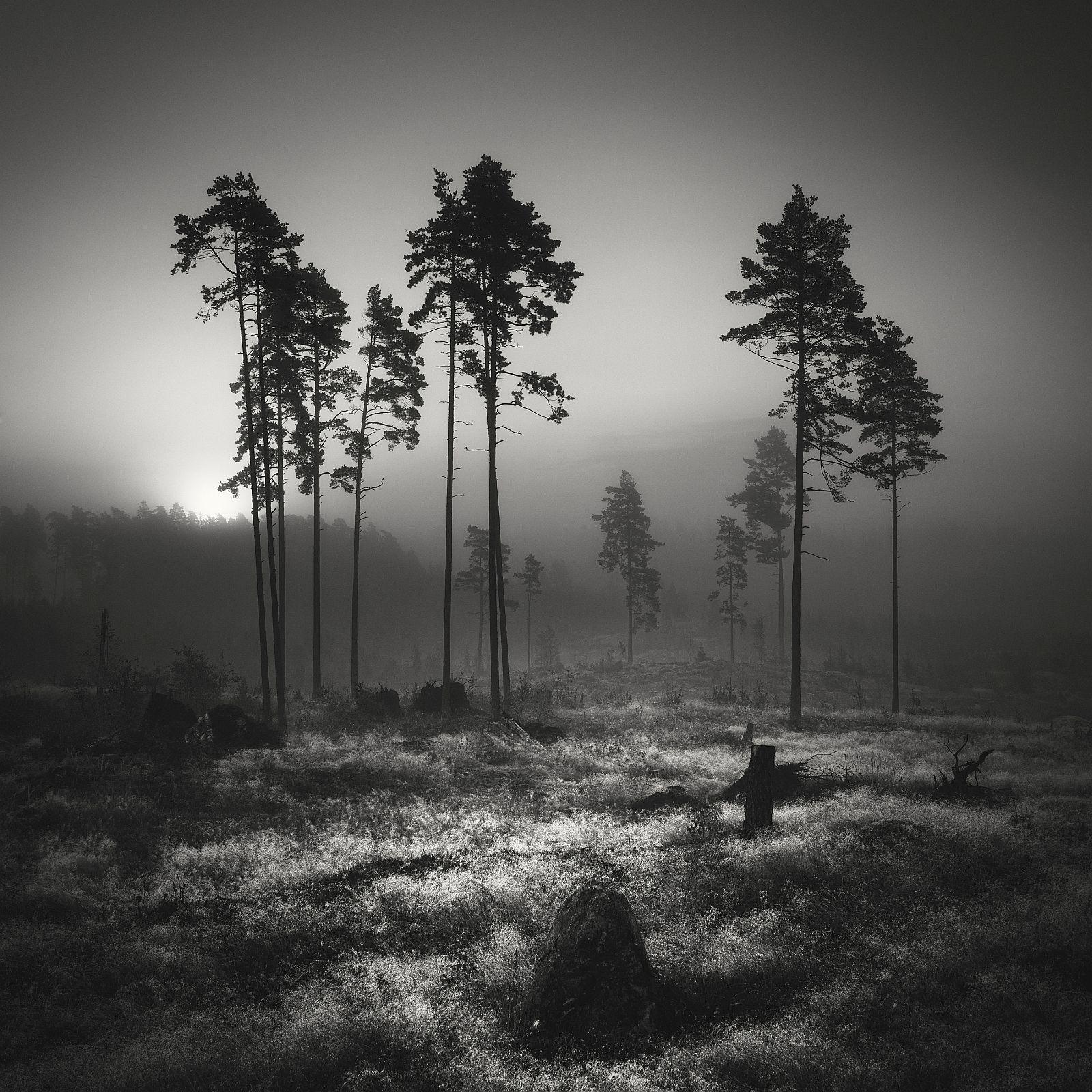«Сосновые леса». Первое место в «Nature trees». Фото: Vesa Pihanurmi