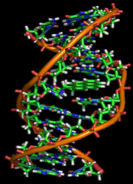 Молекула ДНК имеет форму закрученной спирали
