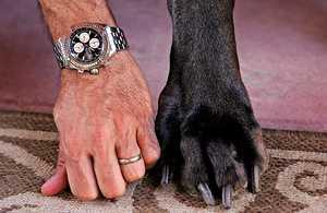 Самая большая собака в мире и её лапы